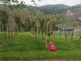 Genussticket für das Genusswandern Deutschlandsberg