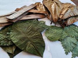 Blätter Paket