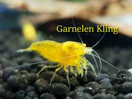 Yellow King Kong OE