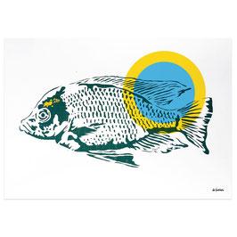 Fisch // Postkarte