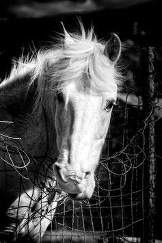 Crin Blanc (Noir et Blanc) par Mateo Brigande