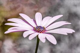 Contons fleurette....par Mateo Brigande