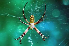 Spider par Mateo Brigande