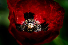 Rouge obscur par Mateo Brigande