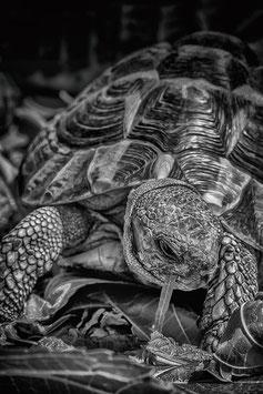 La tortue  par Mateo Brigande