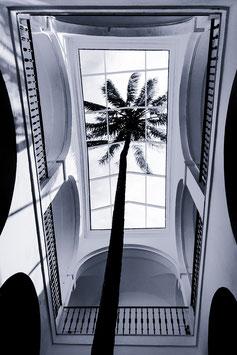 Un palmier en hiver  par Mateo Brigande