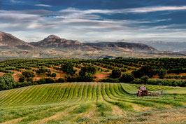 La moisson en Andalousie par Mateo Brigande