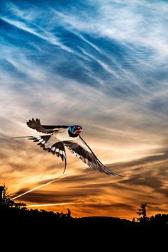 L'hirondelle des beaux jours par Mateo Brigande