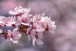 Floraison printanière par Mateo Brigande
