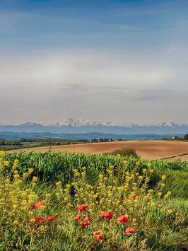 Vue sur les Pyrénées par Mateo Brigande