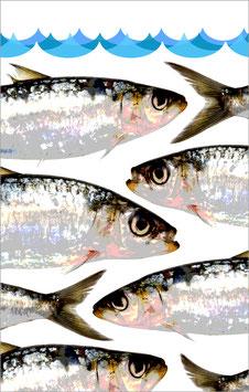 TORCHON SARDINE VERTICALE  #Sardines