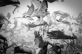 IXXI BIRD MIGRATION