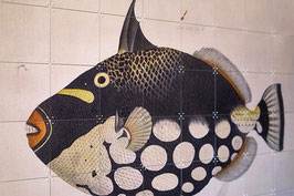 IXXI BLACK FISH NATURALIS