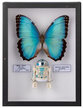 COFFRET ENTOMOLOGIQUE STAR WARS R2-D2