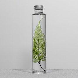 BOTTLE PLANT XL TABARIA FERN 019