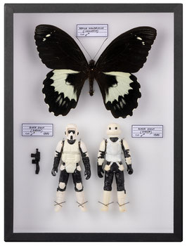 COFFRET ENTOMOLOGIQUE STAR WARS BIKER SCOUT