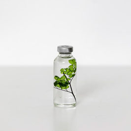 BOTTLE PLANT XS ADIANTUM 004