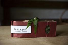 Spitzwegerich, Bio