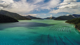 Nydia Bay, Marlborough Sounds