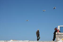 Essaouira -Pêcheurs