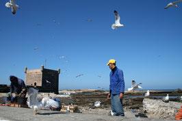 Essaouira -Port - Pêcheurs