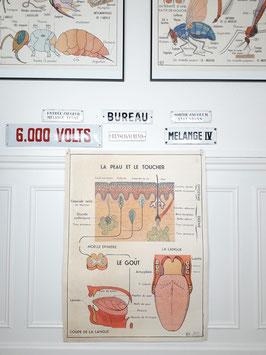 Affiche MDI La peau, Le Toucher/Le système nerveux