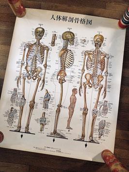 Ancienne affiche japonaise squelette du corps humain
