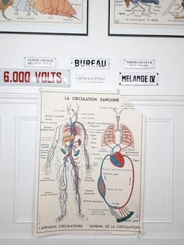 Affiche scolaire MDI La circulation Sanguine