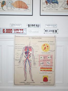 Affiche scolaire Rossignol Le coeur/La circulation sanguine