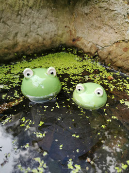 Schwimmender Frosch