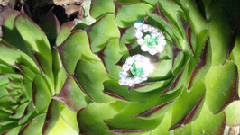 Ohrstecker mit grünem Kristall