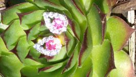 Ohrstecker mit pinken Kristall