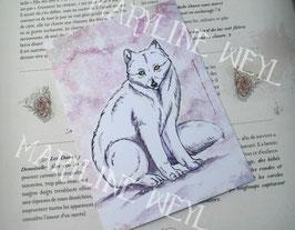 carte postale renard polaire