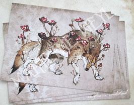 carte postale loup champignon