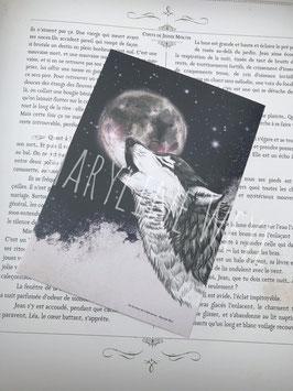 carte postale loup noir