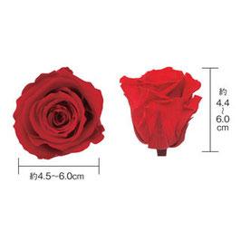 花材少量販売(3輪)フロールエバー