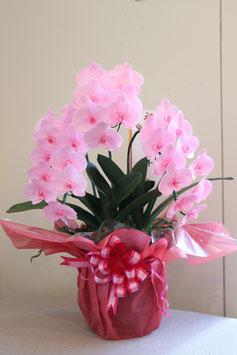 プリザ胡蝶蘭(コチョウラン)鉢物 桃3本立て