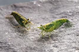 Green Jade