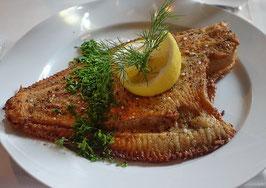 Fischkräuter (Aus dem Wasser)