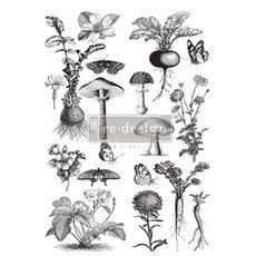 "re-design Transfer ""Fungi Forest"""