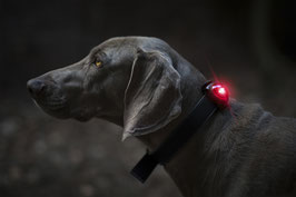 Orbiloc Dog Dual LED-Sicherheits(blink)licht
