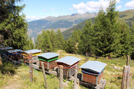 The first and only Swiss Alpine Honey subscription!