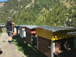 "Valais linden honey ""Euseigne"", 1000m"