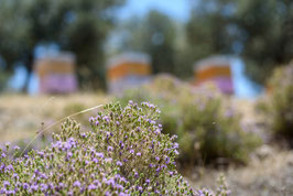 Thyme honey from the Peloponnese