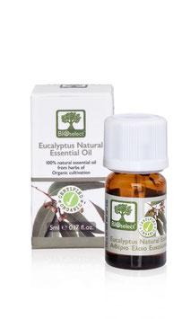 Eukalyptus – zertifiziert biologisch