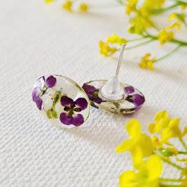 Ohrstecker mit echten Blumen  von uniq