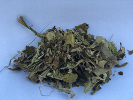 Yacon Blätter