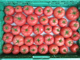 Tomaten Berner Rose