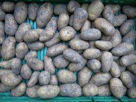 Kartoffel mehligkochend