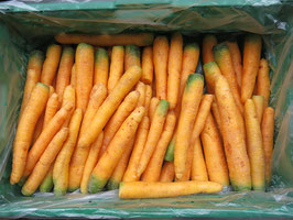 Karotten  gelb